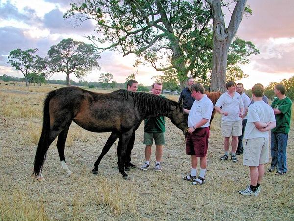 horses-9.jpeg