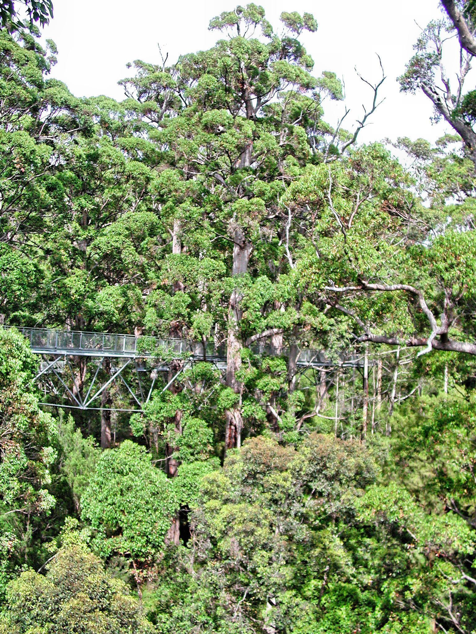 This should be Treetop-walk-6.jpeg.  Is it missing?