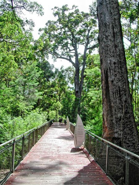 Treetop-walk-1.jpeg
