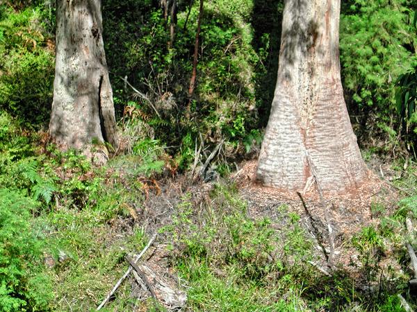 Treetop-walk-10.jpeg