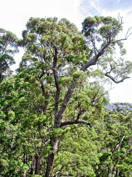 Treetop-walk-4.jpeg