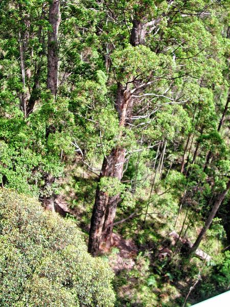 Treetop-walk-5.jpeg