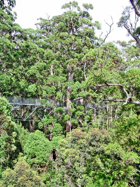 Treetop-walk-6.jpeg