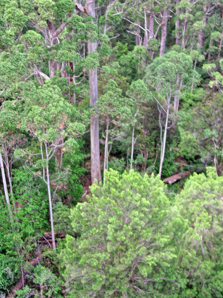 Treetop-walk-9.jpeg