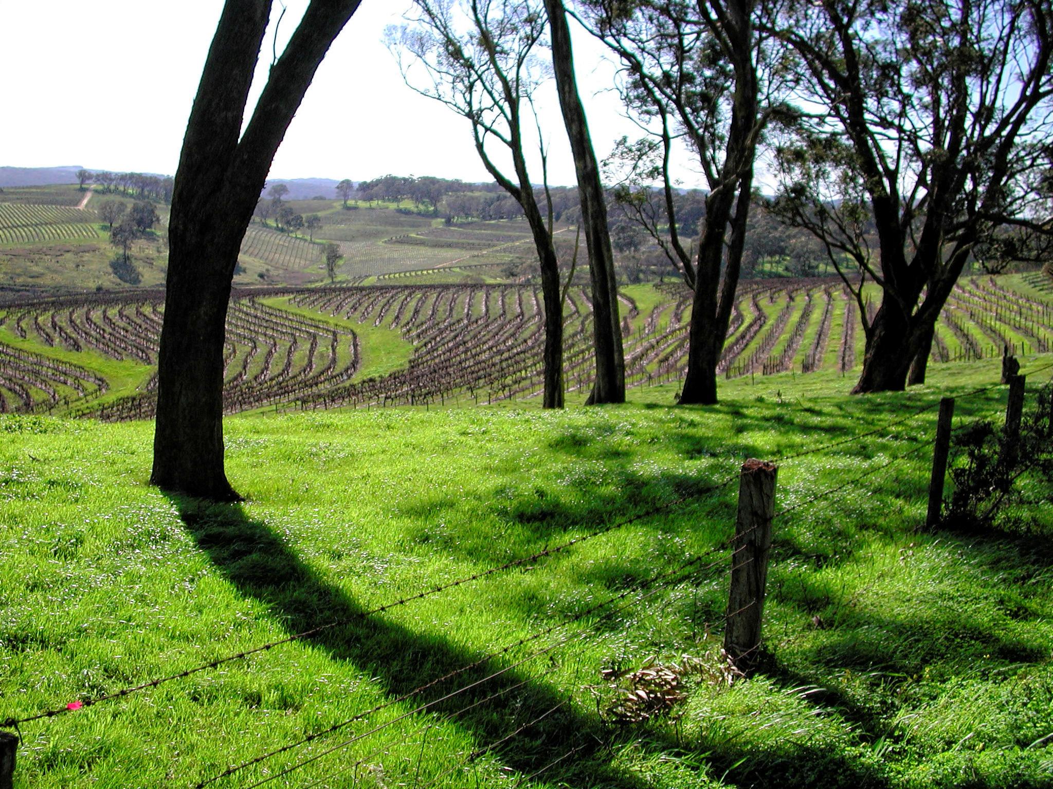 winery-16.jpeg