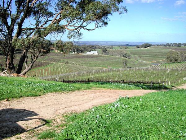 winery-11.jpeg