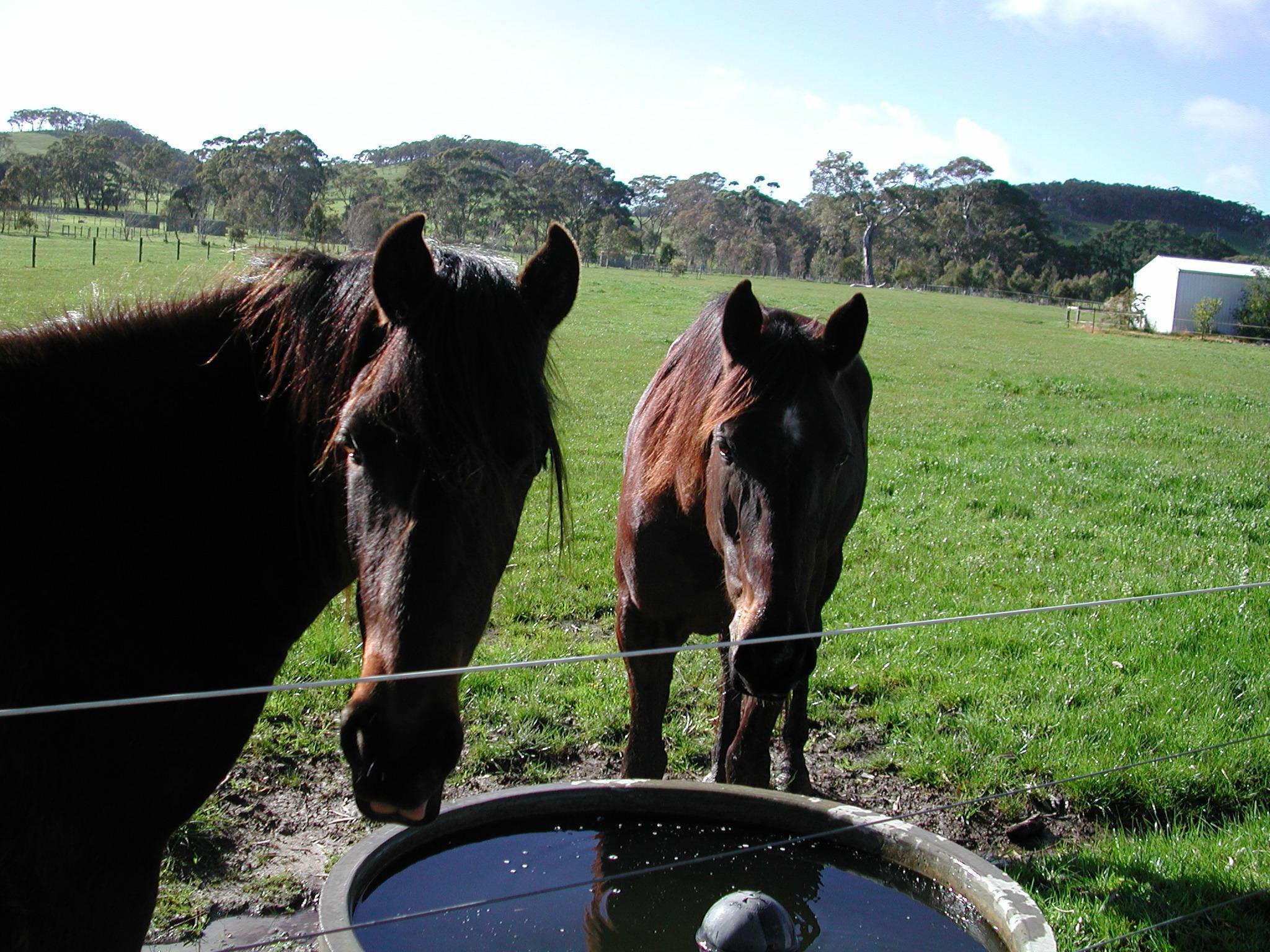 Horses-11.jpeg