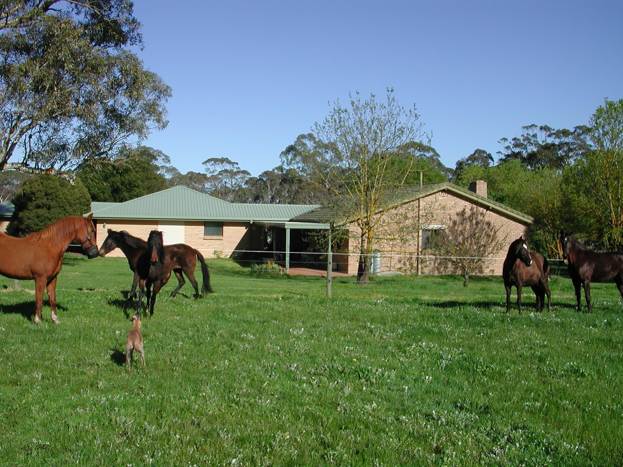 Horses-4.jpeg