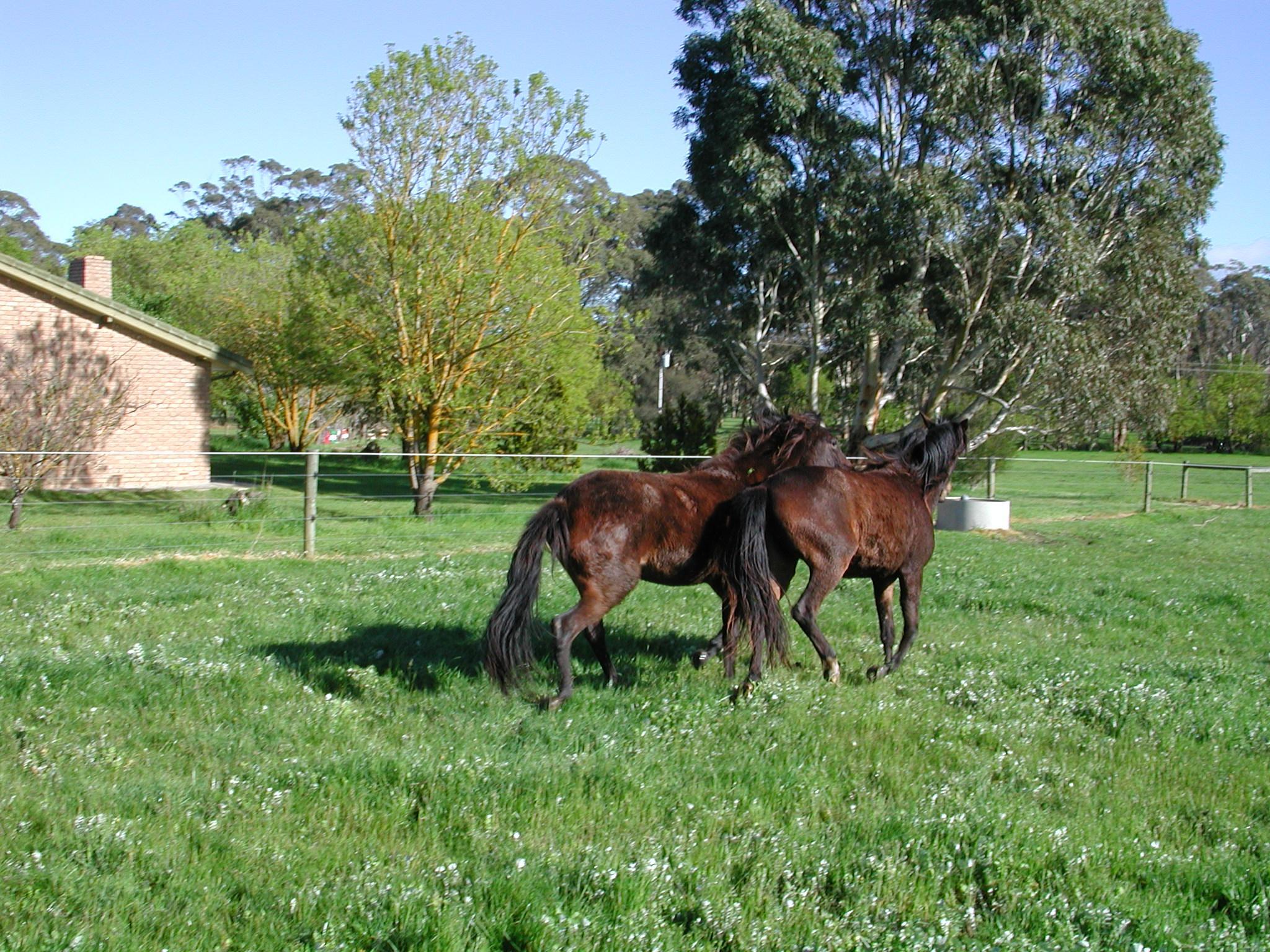 Horses-6.jpeg