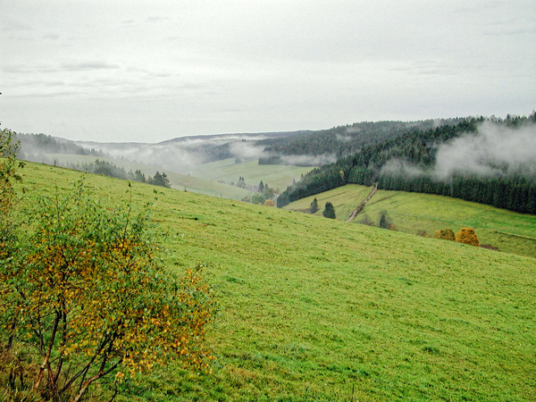 schwarzwald-1.jpeg
