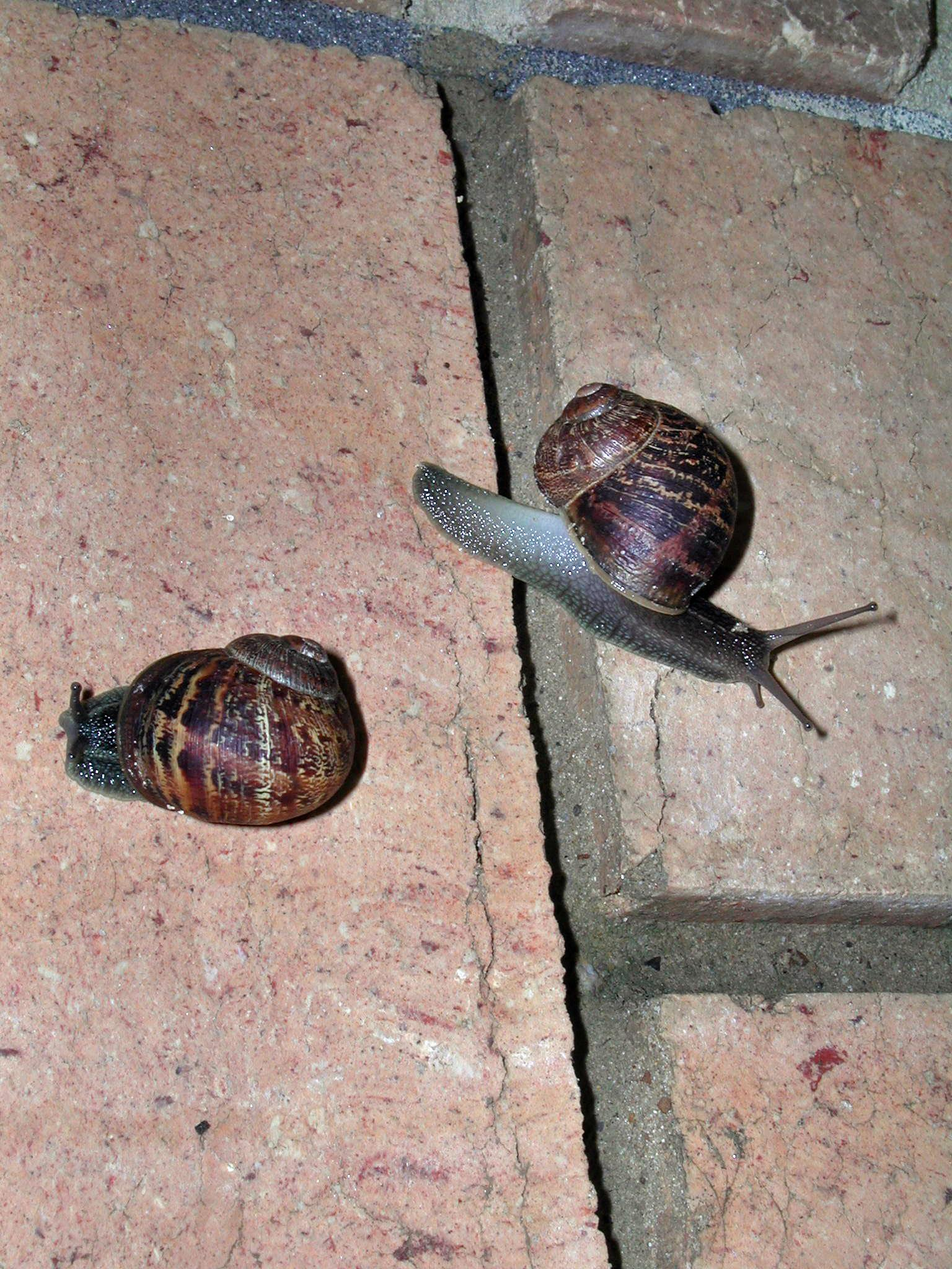This should be snail-1.jpeg.  Is it missing?