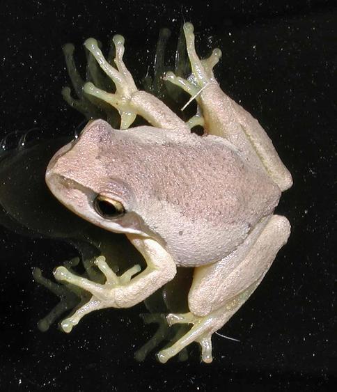 frog-1.jpeg