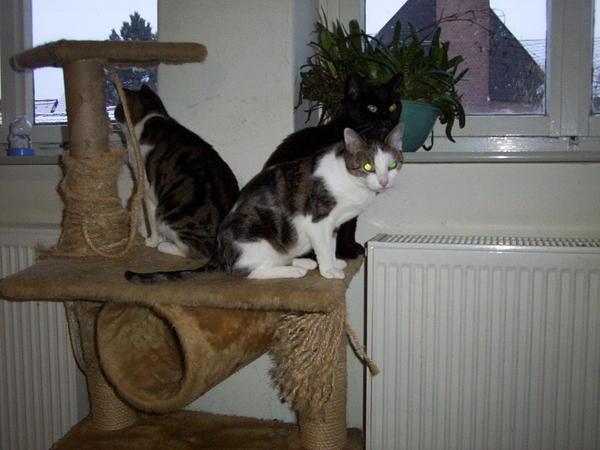 cats-4.jpeg