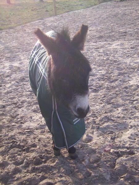 donkey-1.jpeg