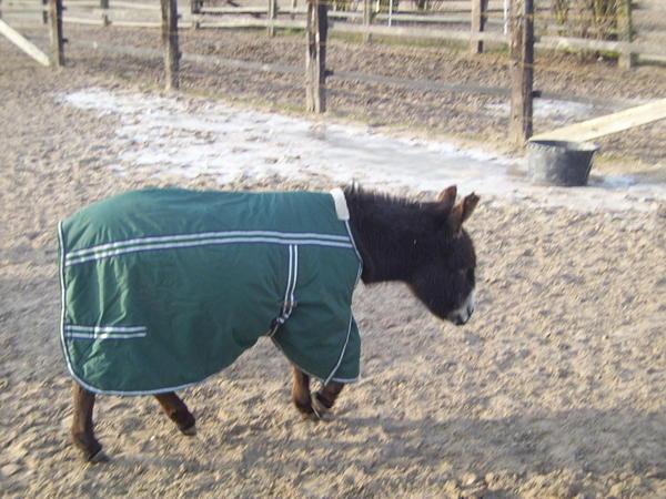 donkey-2.jpeg