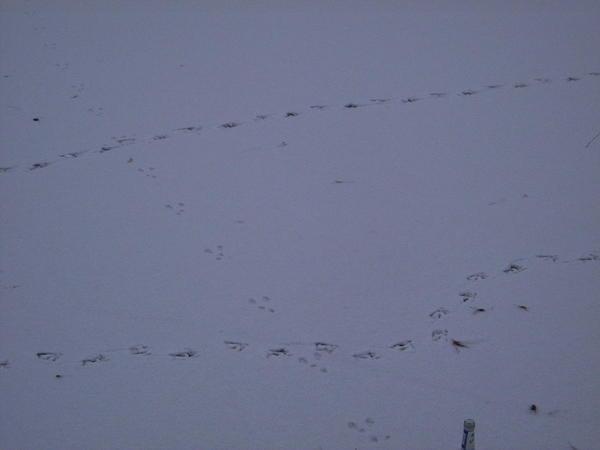 footprints-in-snow-3.jpeg