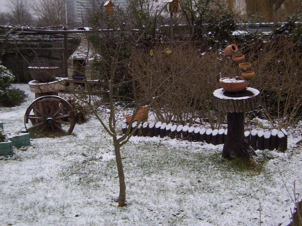 garden-in-winter.jpeg