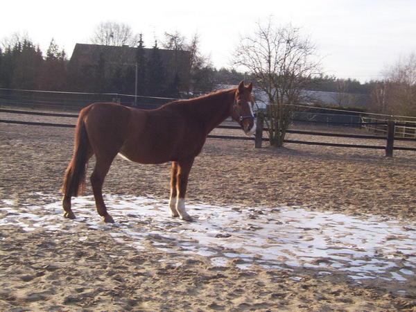 horse-1.jpeg