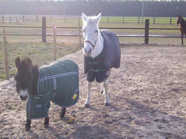 nur-and-donkey.jpeg