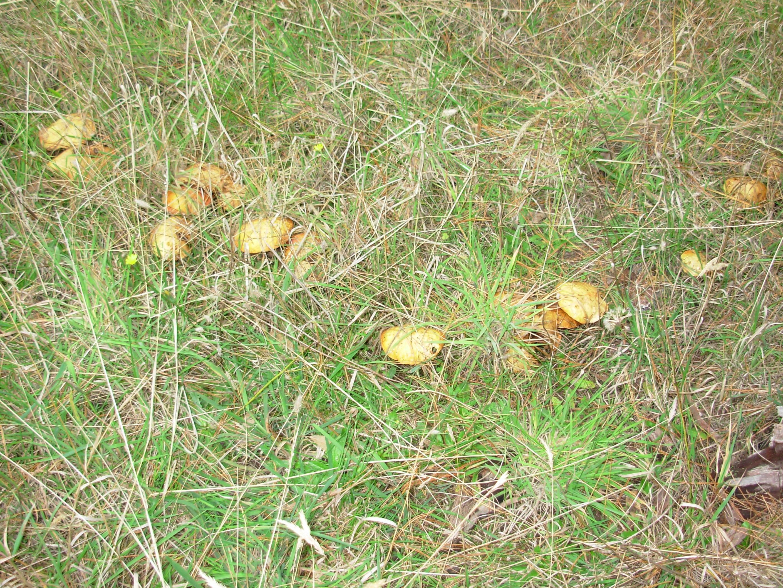mushroom-4.jpeg