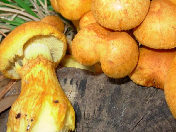 mushroom-14.jpeg