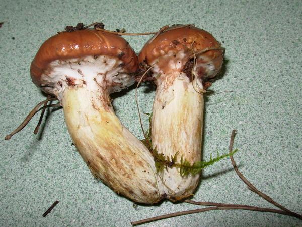 mushroom-20.jpeg