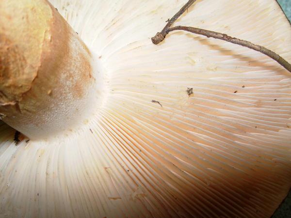 mushroom-23.jpeg