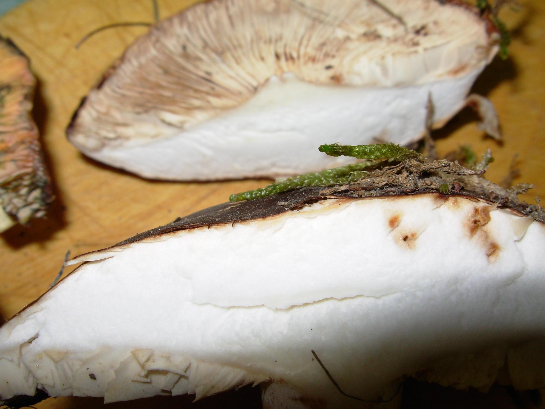 mushroom-6.jpeg