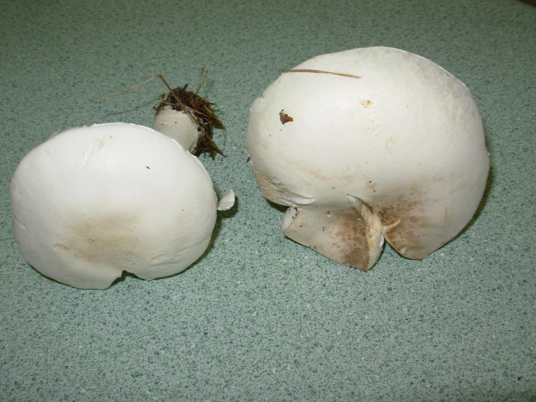 mushroom-7.jpeg
