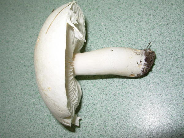 mushroom-5.jpeg