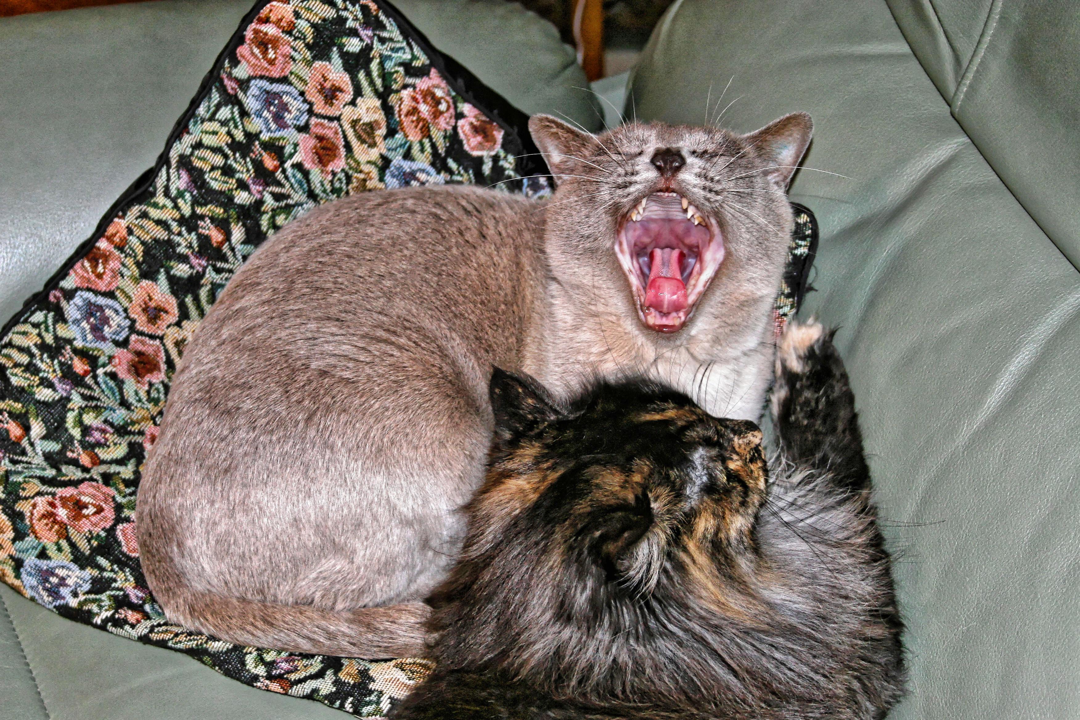 Cats-6.jpeg