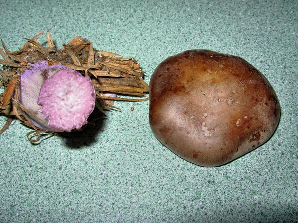 mushroom-3.jpeg