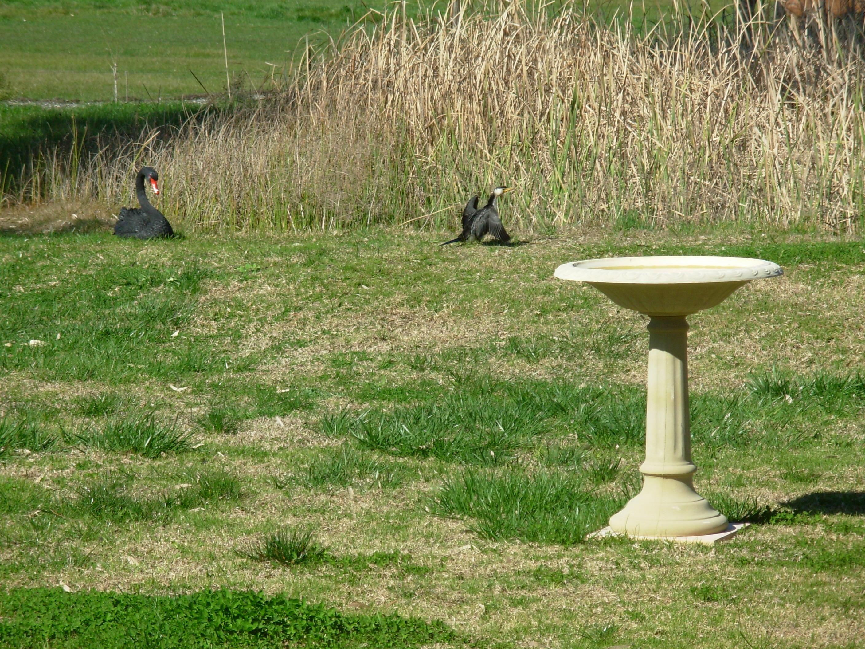 cormorant-1.jpeg