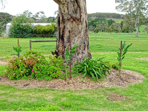 garden-6.jpeg