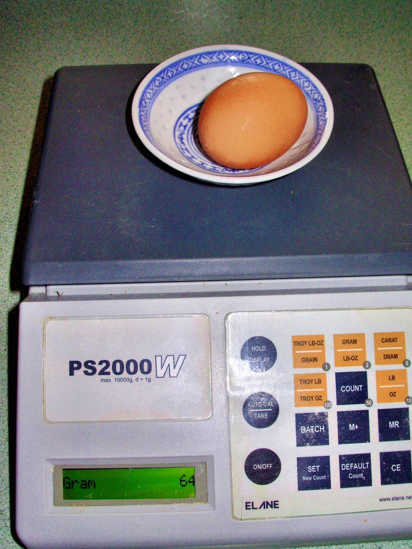 egg-3.jpeg