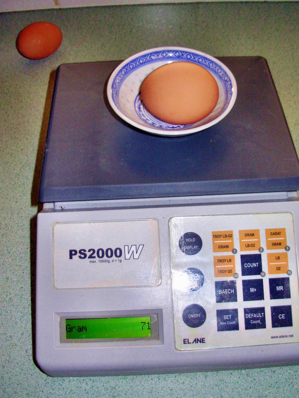 egg-4.jpeg