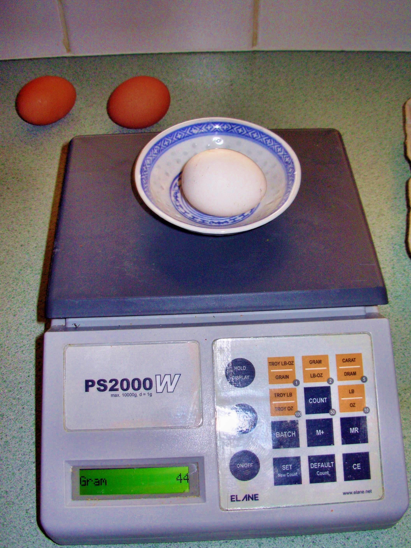 egg-5.jpeg