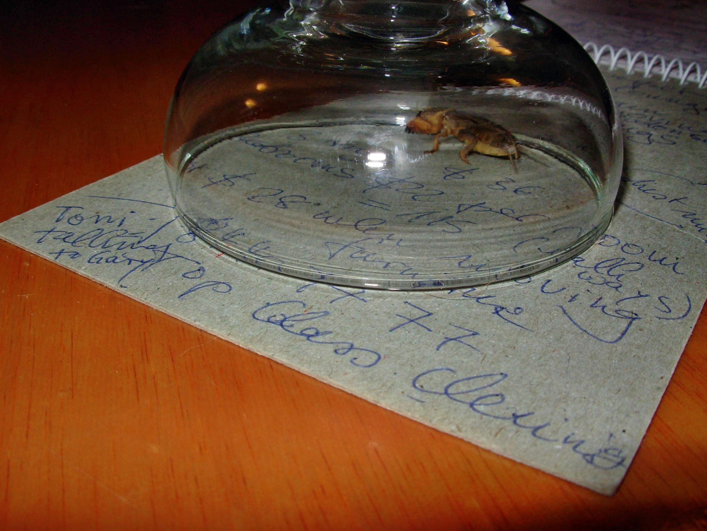 cicada-4.jpeg