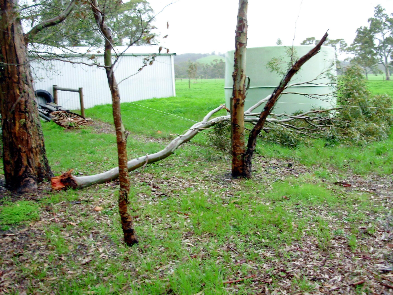 fallen-branch.jpeg