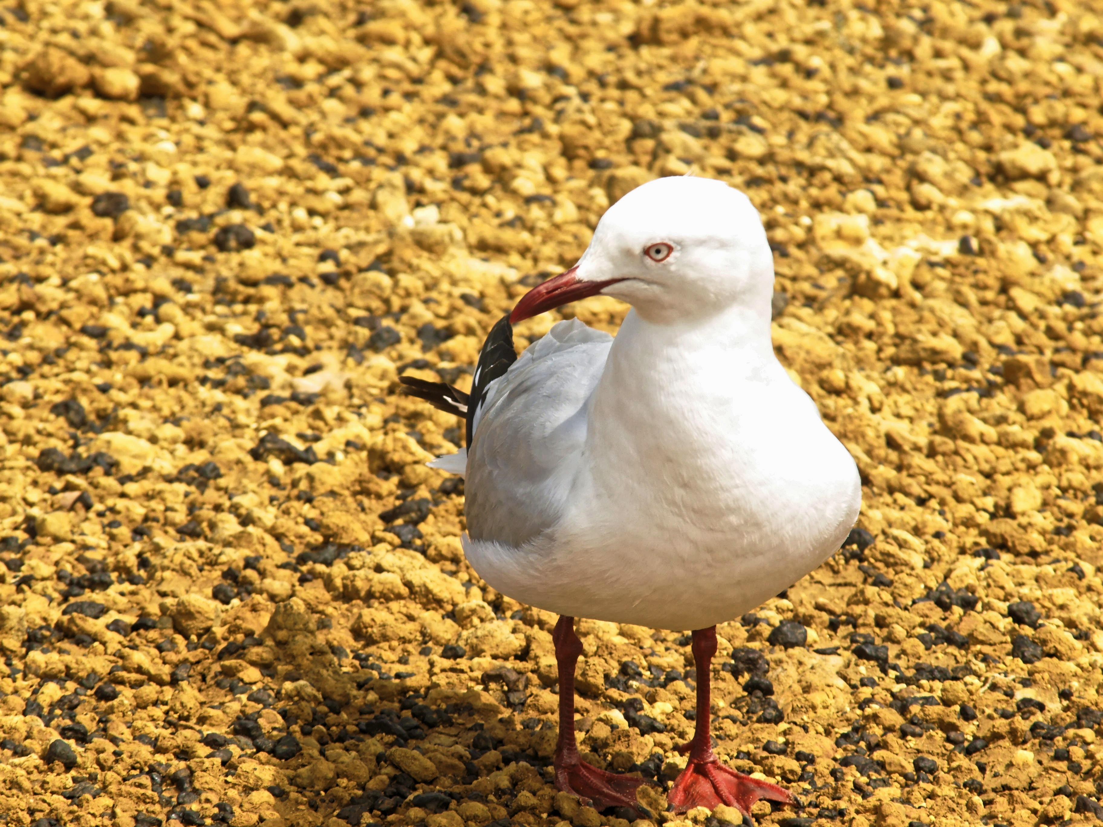 seagull.jpeg