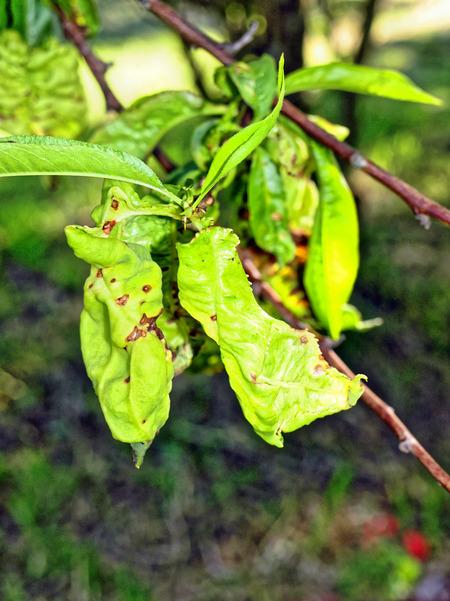 leaf-1.jpeg