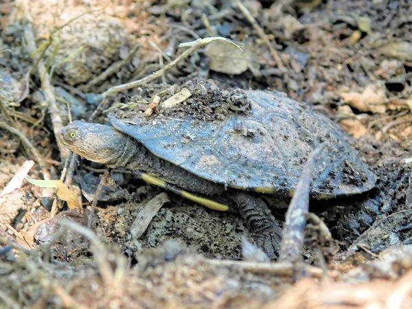 tortoise-3.jpeg