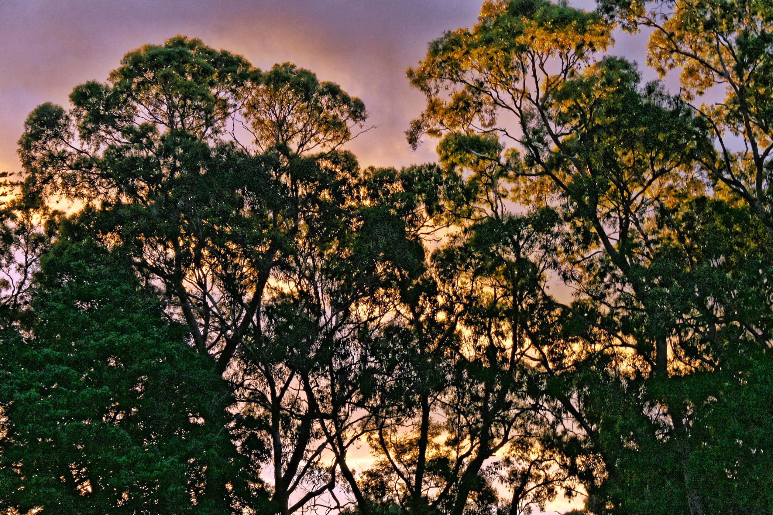 sunset-y-10.jpeg