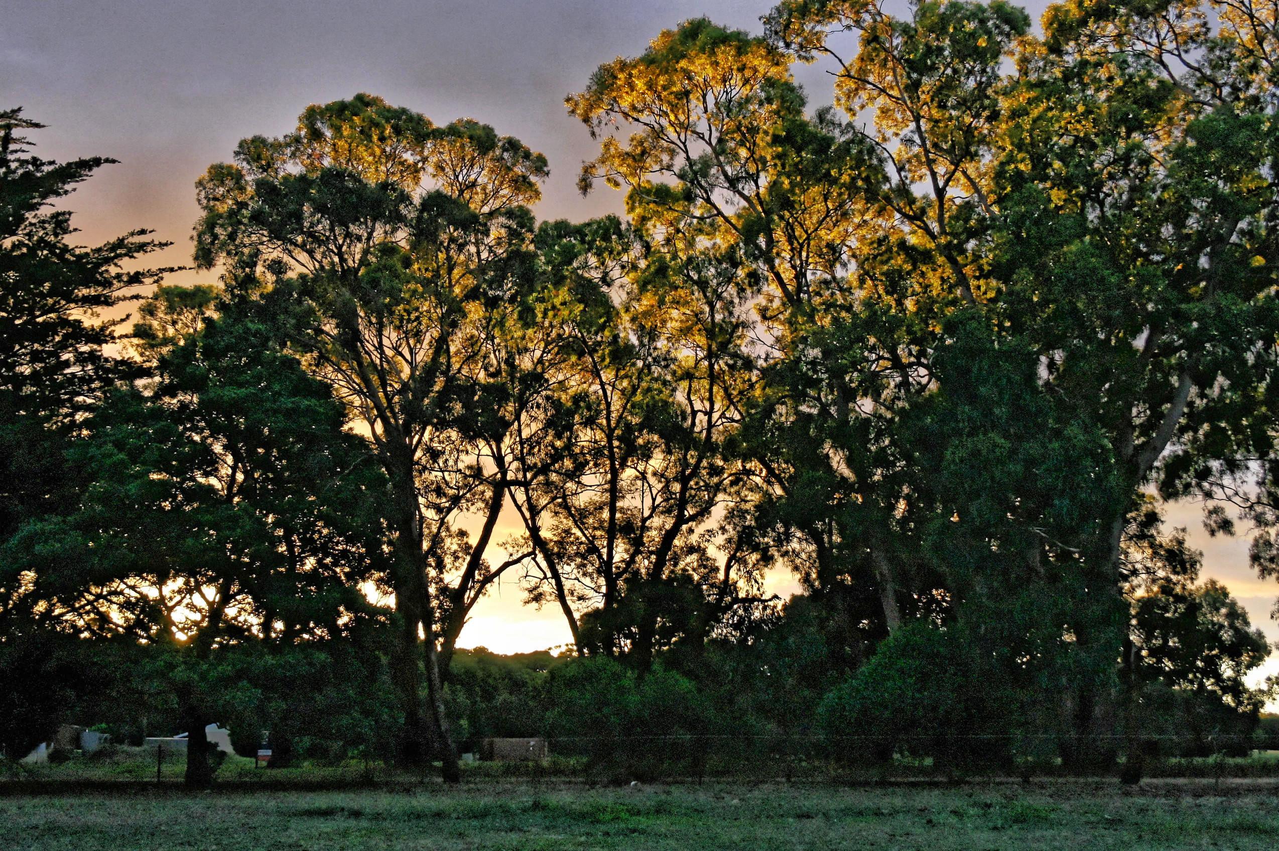 sunset-y-2.jpeg
