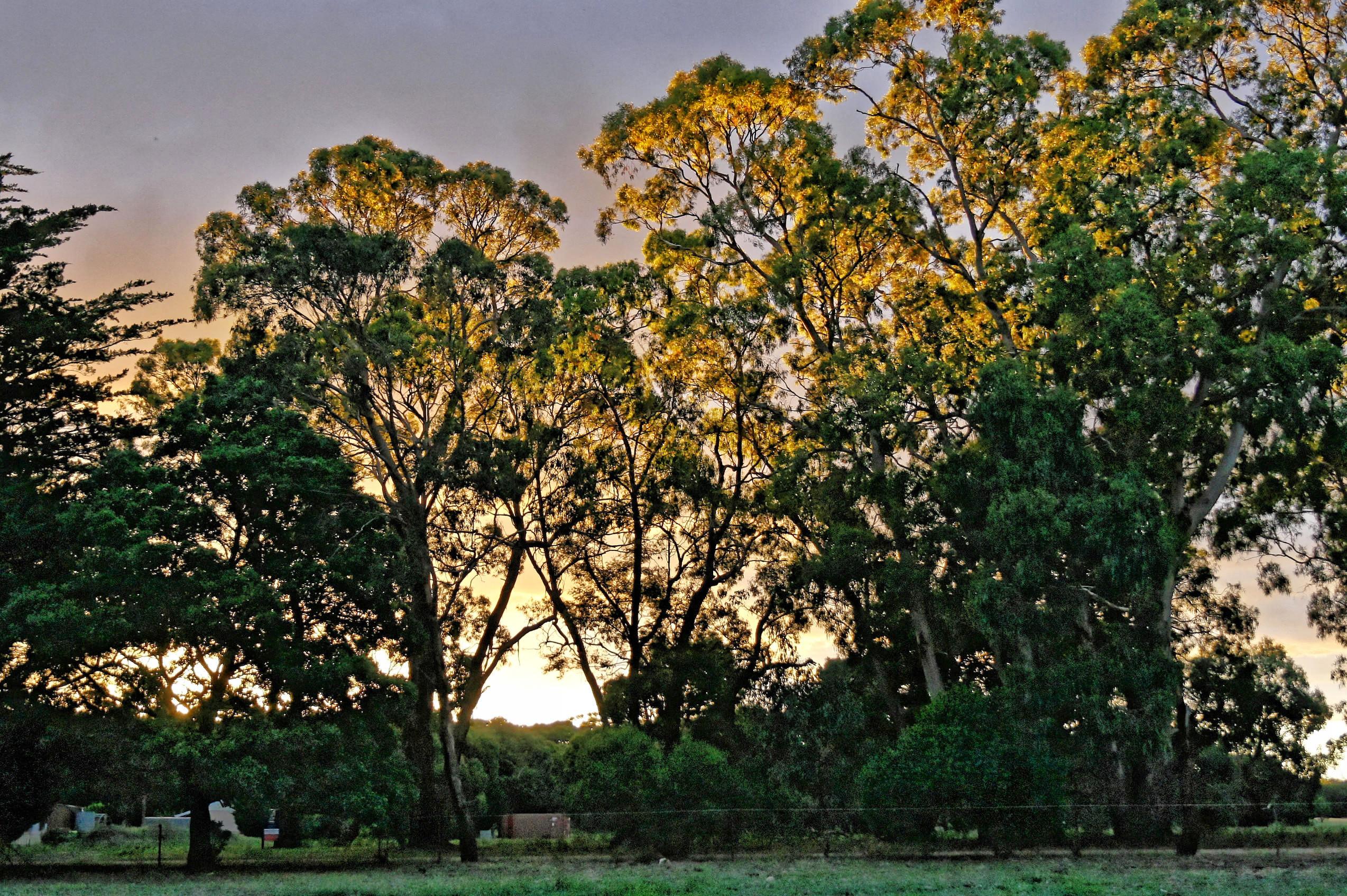 sunset-y-3.jpeg