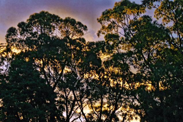 sunset-y-11.jpeg