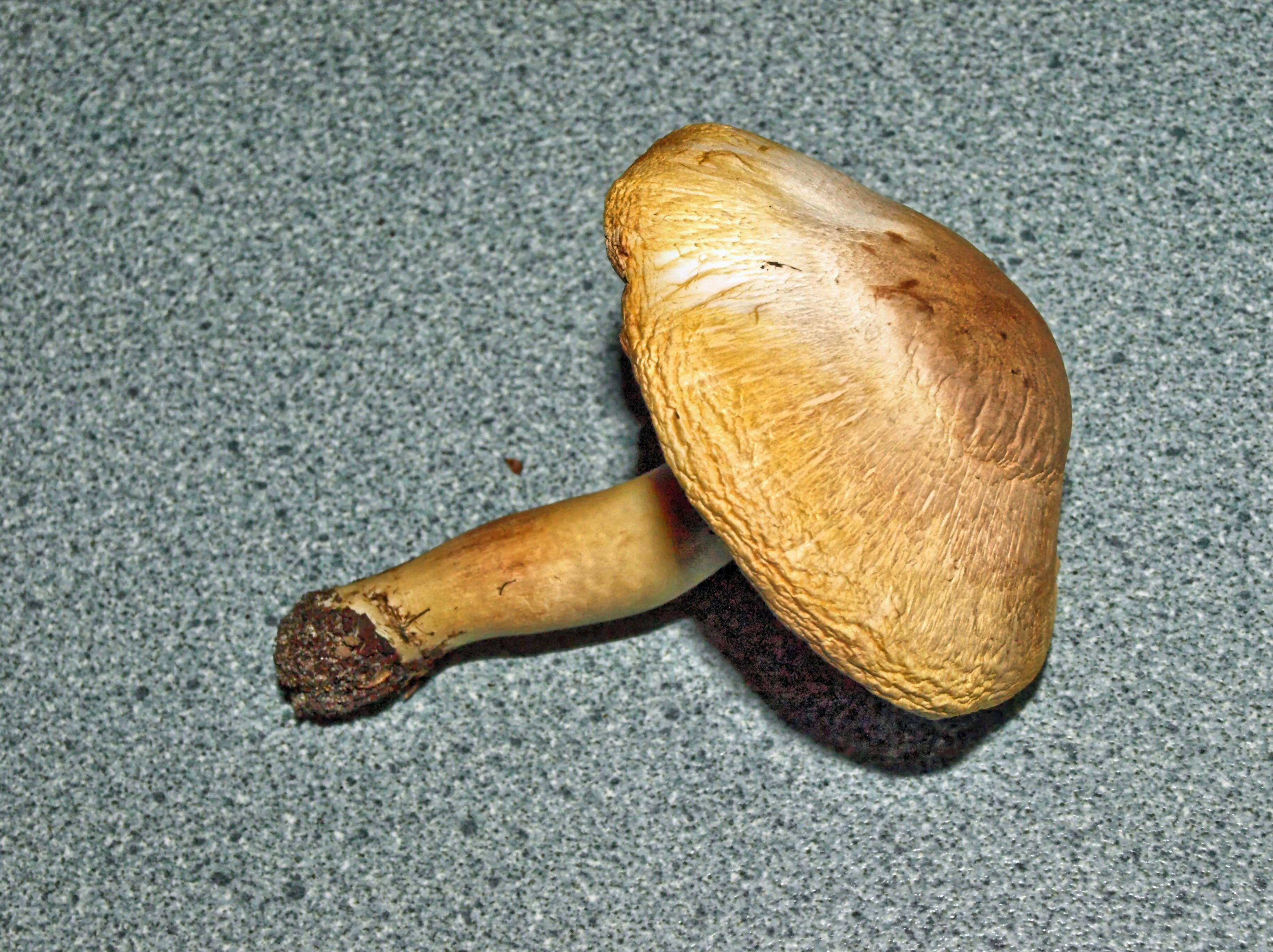 mushroom-1.jpeg