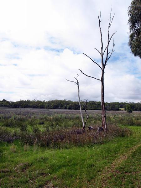 dereel-swamp-2.jpeg
