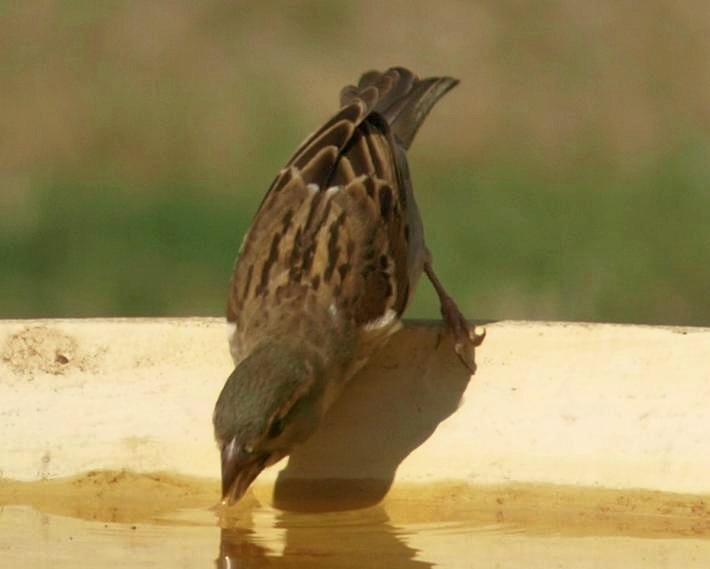bird-3.jpeg