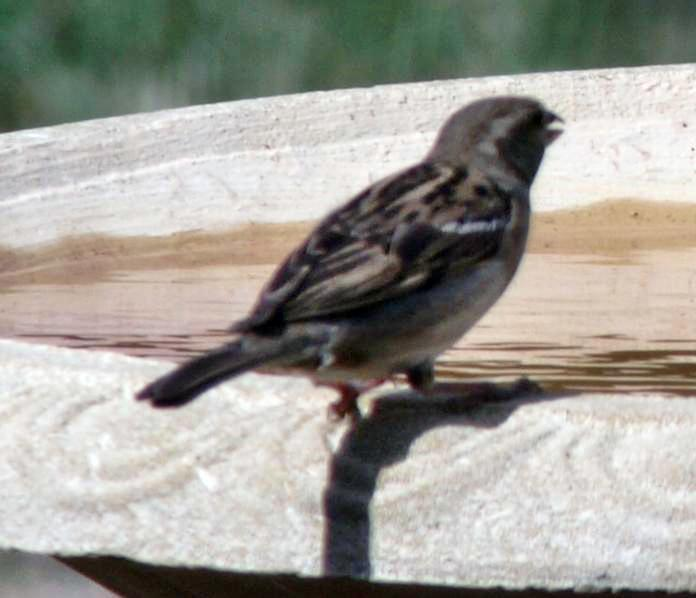 bird-5.jpeg